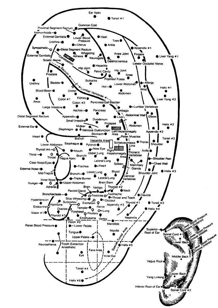 ear acupuncture for pain in cleveland, ohio on acupuncture points map, acupuncture needle placement map, face acupuncture map, foot acupuncture map, acupuncture meridian map, eye acupuncture map, nervous chinese acupuncture map, tongue acupuncture map, auricular acupuncture map, acupuncture brain map, ear acupuncture map,